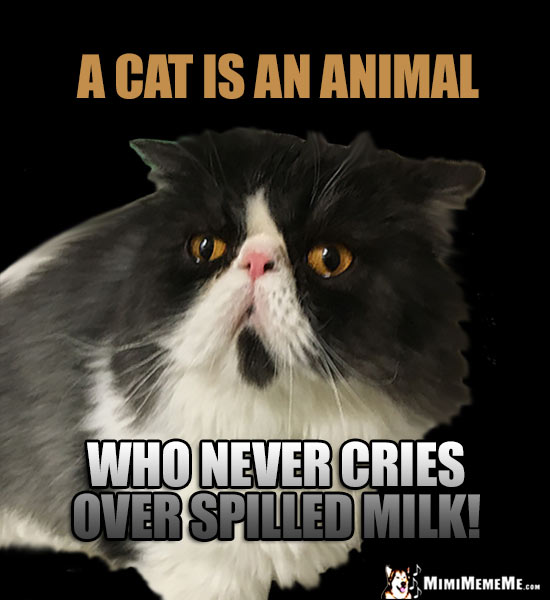 Feline Humor: A cat is an animal who never cries over spilled milk!