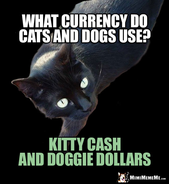 Pet Fun Facts: What currency do cats and dogs use? Kitty cash and doggie dollars