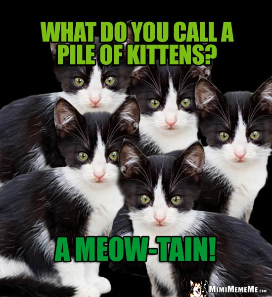 Cute Cat Riddle: What do you call a pile of kittens? A Meow-Tain!