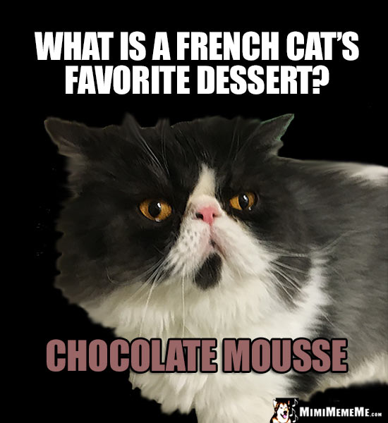 Refined Cat Humor: What is a French cat's favorite dessert? Chocolate Mousse