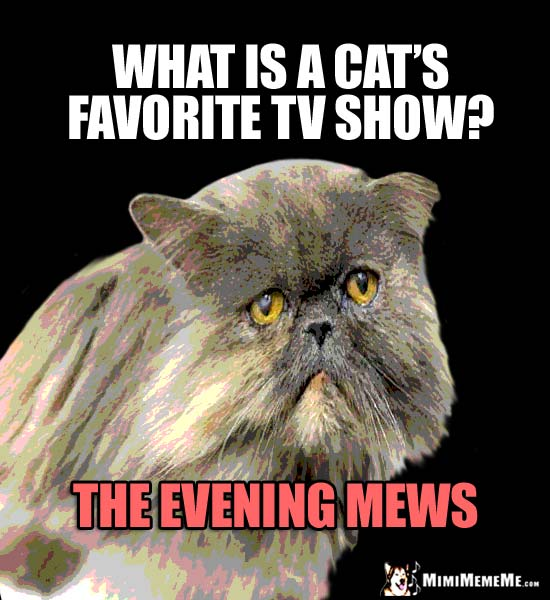 Old Cat Joke: What is a cat's favorite TV show? The Evening Mews