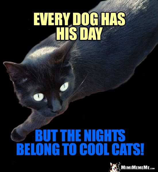 Humorous Cat Wisdom: Every dog has his day, but the nights belong to cool cats!
