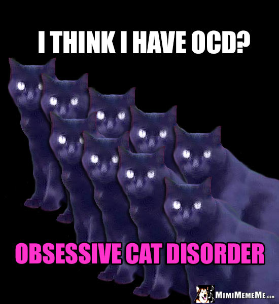 Repetitive Cat Humor: I think I have OCD? Obsessive Cat Disorder