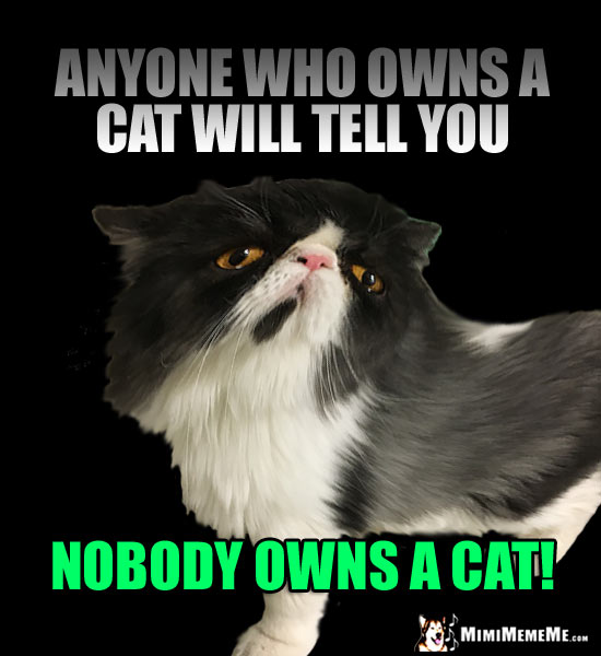 Smug Cat Says: Anyone who owns a cat will tell you nobody owns a cat!