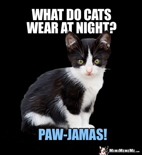 Kitten Asks: What do cats wear at night? Paw-Jamas!
