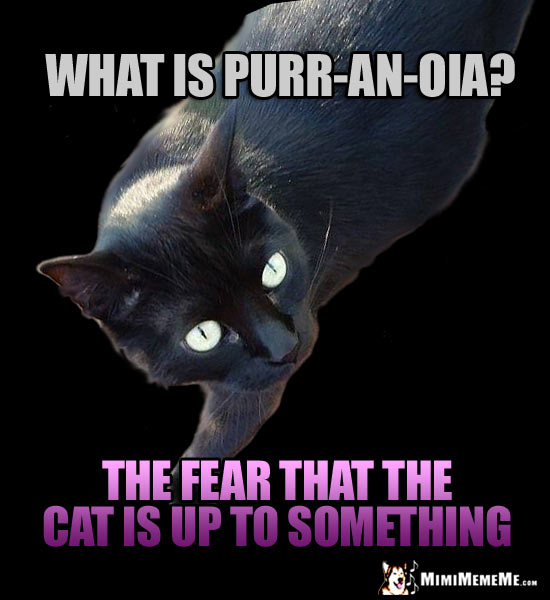 Black Cat Joke: What is purr-an-oia? The fear that the cat is up to something.