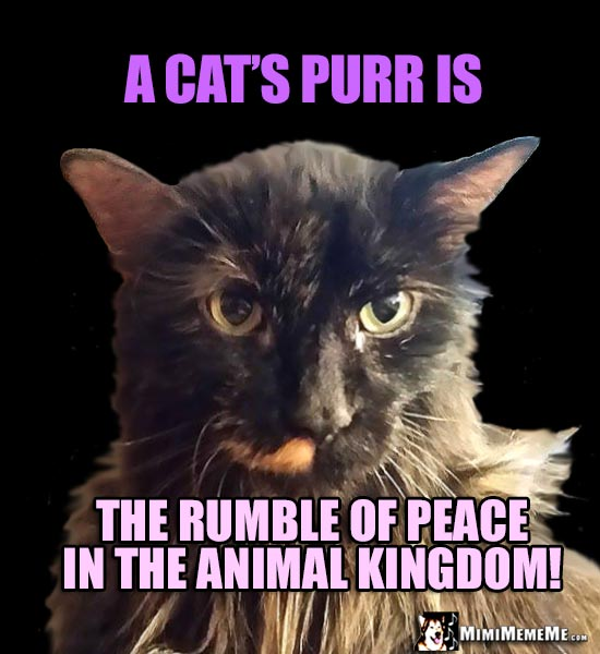 Furry Cat Says: A cat's purr is the rumble of peace in the animal kingdom!
