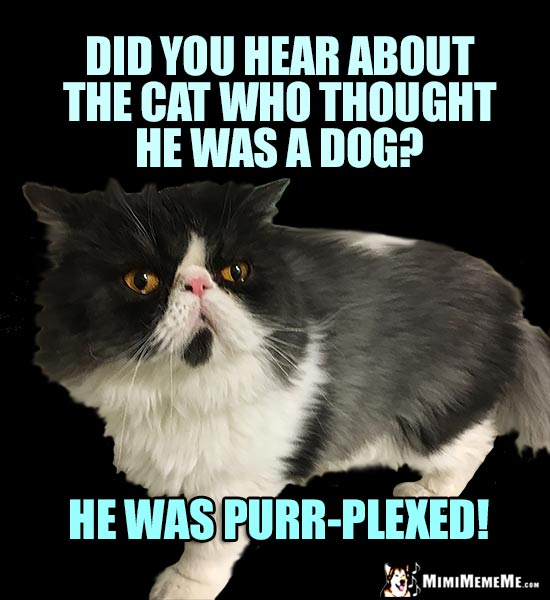 Cat Conundrum: Did you hear about the cat who thought he was a dog? He was purr-plexed!