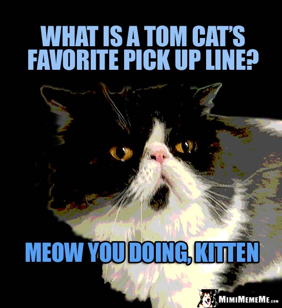Cat Come-On: What is a Tom cat's favortie pick up line? Meow you doing, Kitten