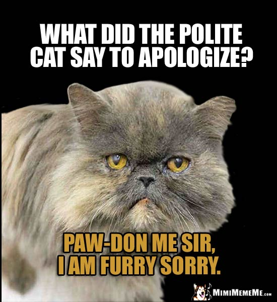 Cat Humor: What did the polite cat say to apologize? Paw-don me sir, I am furry sorry.