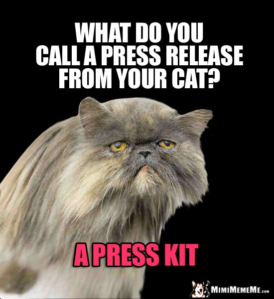 Cat News Flash! What do you call a press release from your cat? A press kit