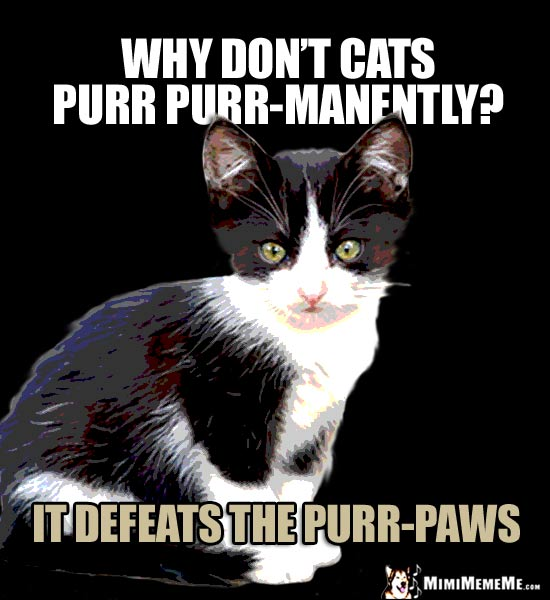 Little Kitten Asks: Why don't cats purr purr-manently? It defeats the purr-paws