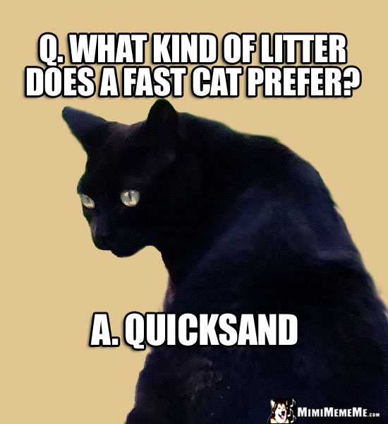Funny Cat Riddle: Q. What kind of litter does a fast cat prefer? A. Quicksand