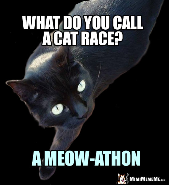 Cat Riddle: What do you call a cat race? A Meow-athon