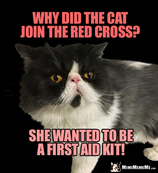Silly Cat Riddle: Why did the cat join the Red Cross? She wanted to be a first aid kit!
