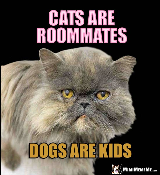 Fat Cat Knows: Cats are roommates. Dogs are kids.