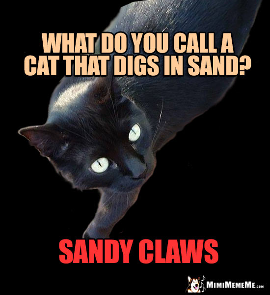 Cat Truths: What do you call a cat that digs in sand? Sandy Claws