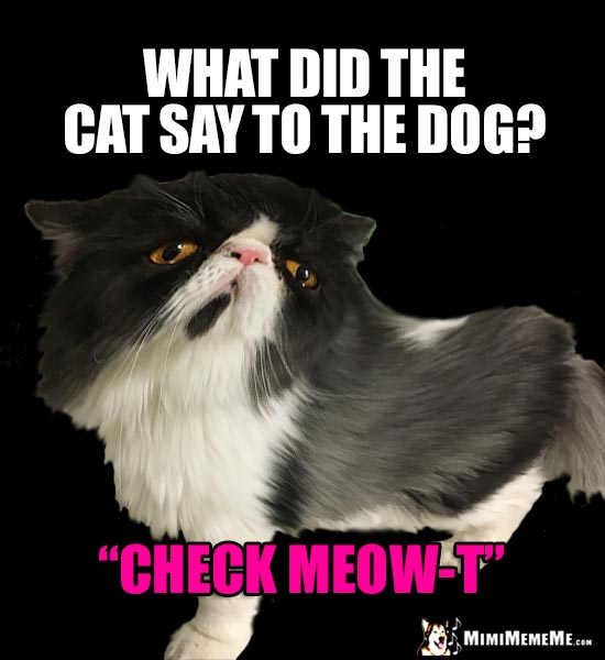 "Cat Joke: What did the cat say to the dog? ""Check Meow-T"""