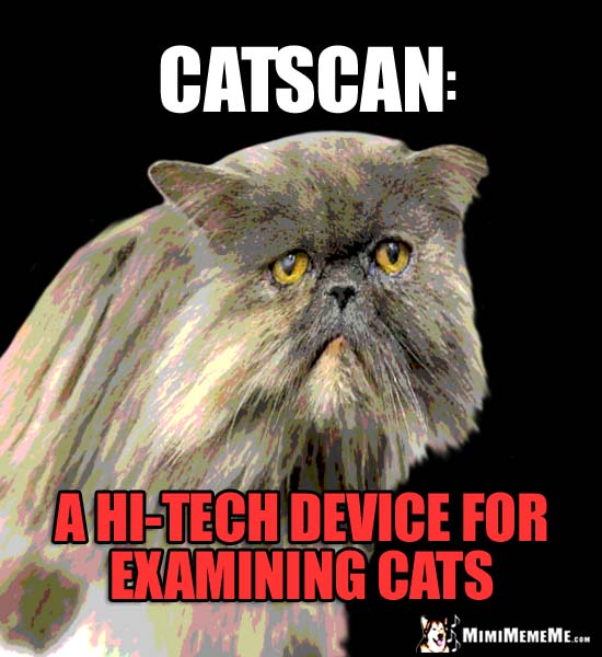 Feline Definitions. Catscan: A hi-tech device for examining cats