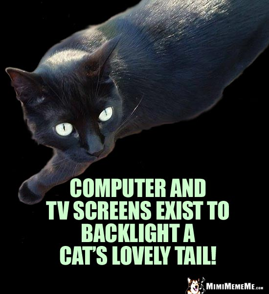 Cat Truth: Computer and TV screens exist to backlight a cat's lovely tail!