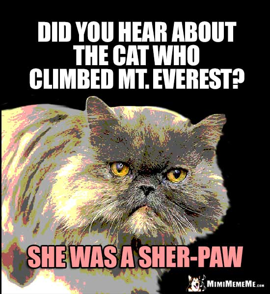 High Cat Humor: Did you hear about the cat who climbed Mt. Everest? She was a Sher-Paw