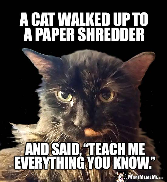 "Feline Joke: A cat walked up to a paper shredder and said, ""Teach me everything you know."""