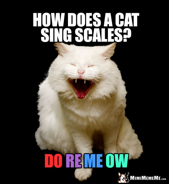 Laughing Cat Asks: How does a cat sing scales? Do Re Me Ow