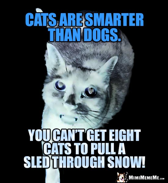 Cold Cat Humor: Cats are smarter than dogs. You can't get eight cats to pull a sled through the snow!