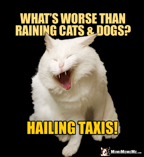 Laughing Cat Tells a Joke: What's worse than raining cats & dogs? Hailing Taxis!