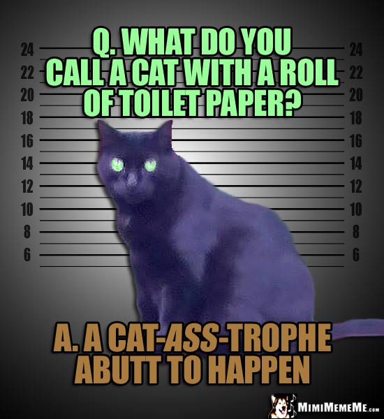 Mug Shot Cat: Q. What do you call a cat with a roll of toilet paper? A. A Cat-Ass-Trophe abutt to happen