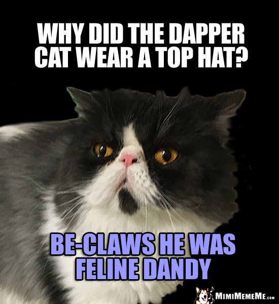 Cat Joke: Why did the dapper cat wear a top hat? Be-claws he was feline dandy