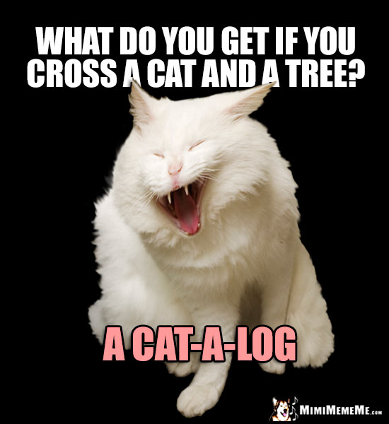 Laughing Cat Asks: What do you get if you cross a cat and a tree? A Cat-A-Log
