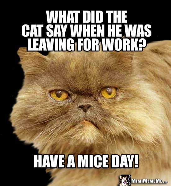 Cat Riddle: What did the cat say when he was leaving for work/ Have a mice day!