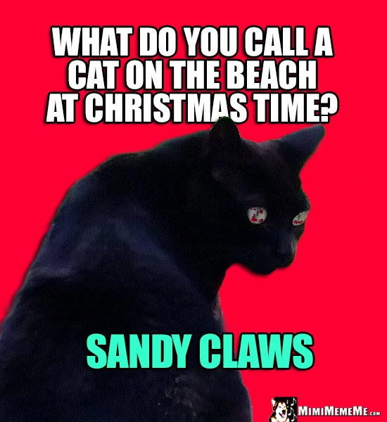 Xmas Cat Joke: What do you call a cat on the beach at Christmas time? Sandy Claws
