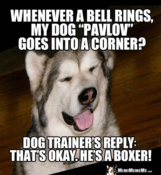 "Dog Joke - Whenever a bell rings, my dog ""Pavov"" goes into a corner? Dog trainer's reply: That's Okay. He's a boxer!"
