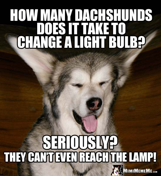 Dog Riddle: How many Dachshunds does it take to change a light bulb? Seriously? They can't even reach the lamp!