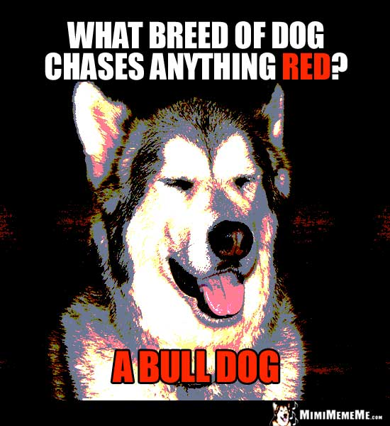 Dog Joke: What breed of dog chases anything red? A Bull Dog