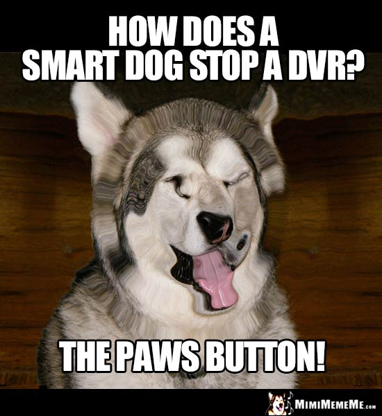 Dog Joke: How does a smart dog stop a DVR? The paws button!