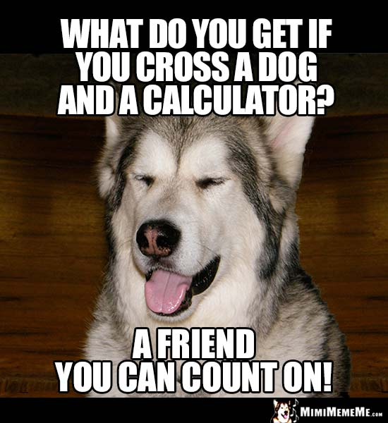 Dog Riddle: What do you get if you cross a dog and a calculator? A friend you can count on!