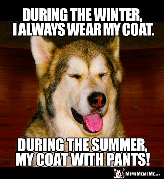 Dog Joke: During the winter, I always wear my coat. During the summer, my coat with pants!