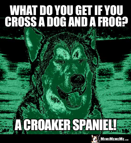 Dog Riddle: What do you get if you cross a dog and a frog? A Croaker Spaniel!
