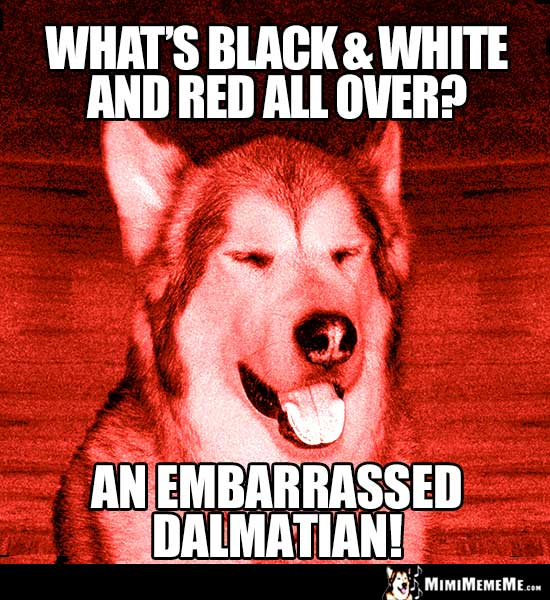 Dog Riddle: What's black & white and red all over? An embarrassed Dalmatian1