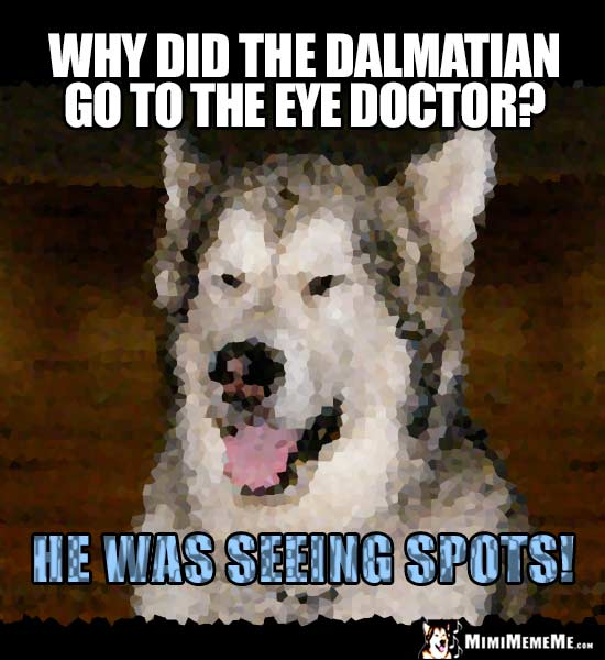 Dog Joke: Why did the Dalmatian go to the eye doctor? He was seeing spots!