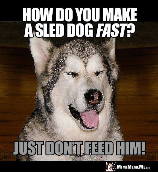 Dog Joke: How do you make a sled dog fast? Just don't feed him!