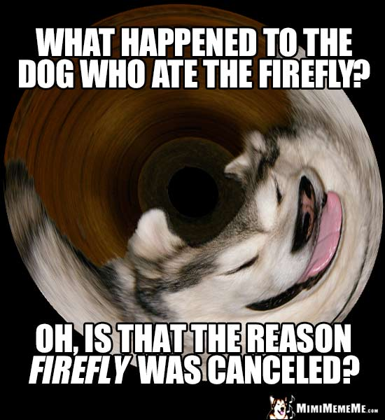 Sci-Fi Dog Joke: What happened to the dog who ate the Firefly? Oh, is that the reason Firefly was canceled?