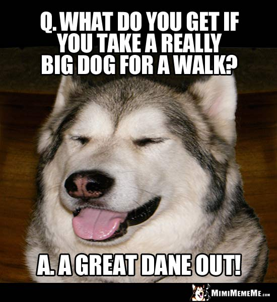 Dog Joke: What do you get if you take a really big dog for a walk? A Great Dane Out!