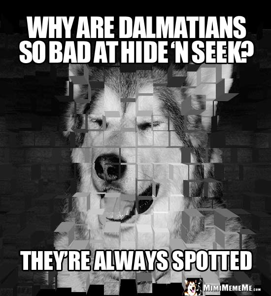 Dog Riddle: Why are Dalmatians so bad at hide 'n seek? They're always spotted