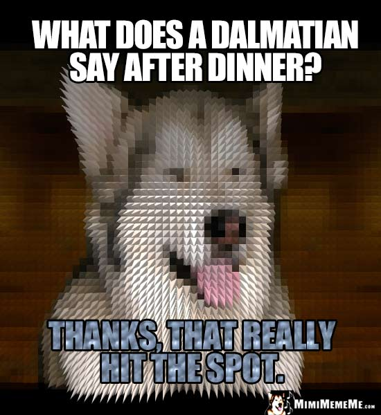 Dog Riddle: What does a Dalmatian say after dinner? Thanks, that really hit the spot.