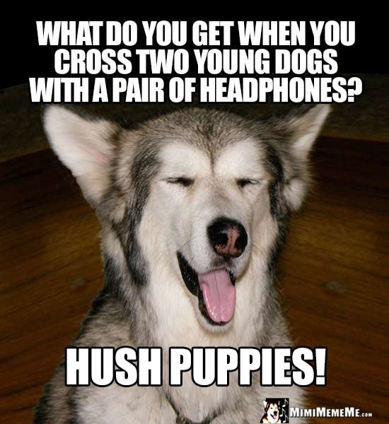 Dog Riddle: What do you get when you cross two young dogs with a pair of headphones? Hush Puppies!