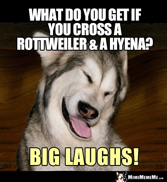 Dog Joke: What do you get if you cross a Rottweiler & a hyena? Big laughs